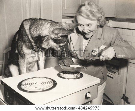 German Shepherd watching woman frying eggs