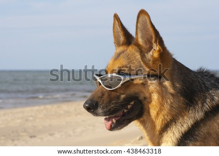 German shepherd with solar glasses