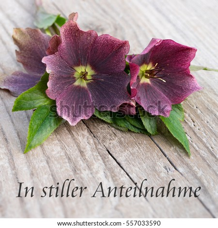 German speaking Mourning card with purple hellebores and text: my sincere condolences / my sincere condolences / Mourning card