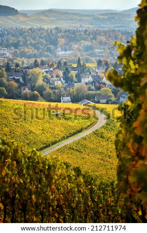 German vineyards in autumn with a lane to the village - stock photo