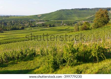 German wine fields landscape at summer - stock photo