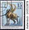 GERMANY - CIRCA 1975: A Stamp printed in GDR shows  Siberian Chamois, Halle, German Zoological Gardens, circa 1975 - stock photo