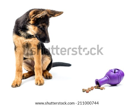 Gerrman shepherd puppy looking curiously at rubber treat release puzzle toy shot on white - stock photo