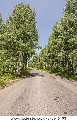 Get off the beaten path and you can find nice, narrow roads through the trees