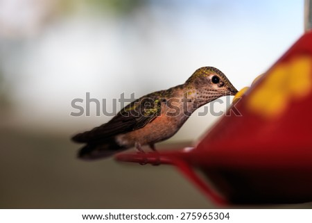 Getting A Sip - stock photo