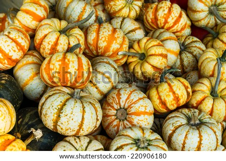 Ghost Rider Squash Ghostrider is a variety of Winter squash  - stock photo