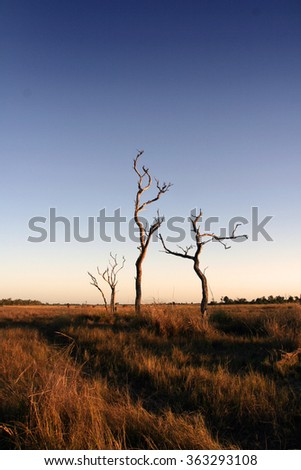 Ghostly trees stand guard over endless expanses - Gulf of Carpentaria, northern Australia.