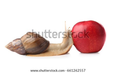 Giant Achatina snail and fresh apple on white background