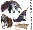 giant anteater hand drawn...