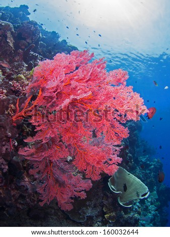 Giant coral on a reef at Bunaken, Indonesia - stock photo