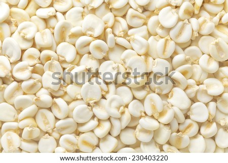 Giant corn - stock photo