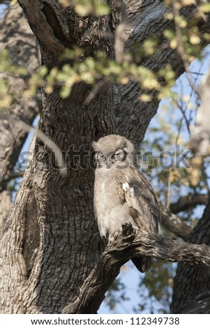 Giant Eagle Owl - stock photo