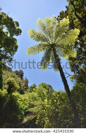 Giant fern among other trees of native New Zealand bush.