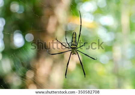 Giant Long-jawed in nature with bokeh background. - stock photo