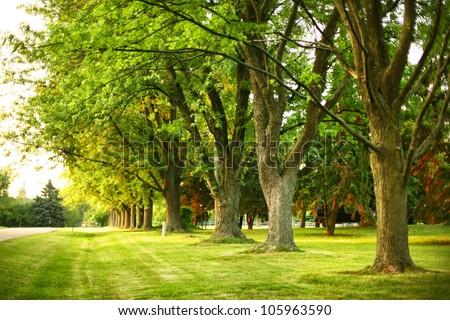 Giant oak trees in a suburban neighborhood in summer - stock photo