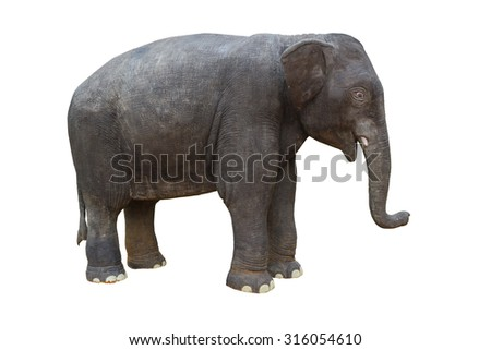 giant plastic baby elephant isolated on white background.