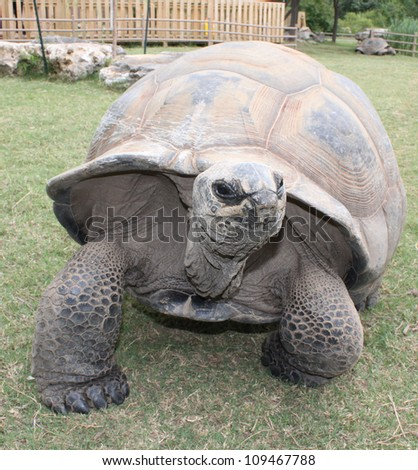 Giant Tortoise - stock photo
