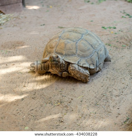 Giant tortoises in Oasis Park on Fuerteventura, Canary Island - stock photo