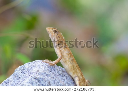 Gila is a reptile in the family Agamidae the scaly tail like living in a tree. Multi-currency and multi-species