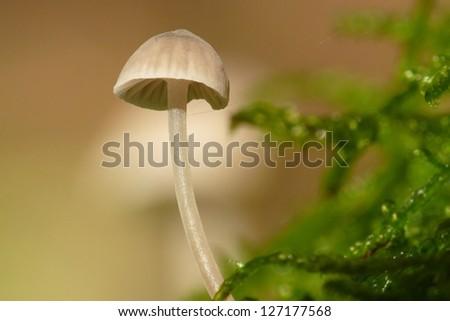 Gill fungus - stock photo