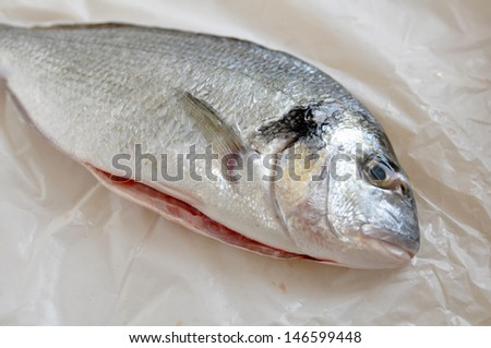 Gilthead seabream - stock photo