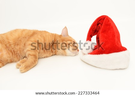 Ginger cat and christmas cap  - stock photo