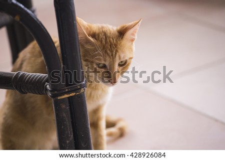 ginger cat angry conceives. Red cat crouched behind a chair, a sly look that up to something, it looks from under a forehead - stock photo