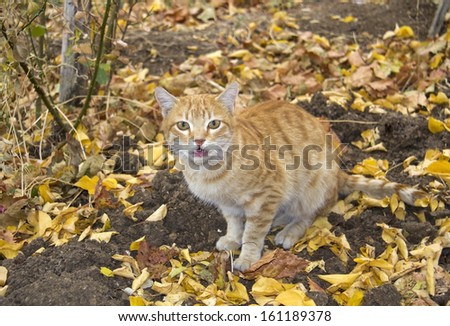 Ginger Cat at fall, outside - stock photo