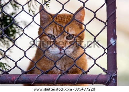 Ginger cat behind a fence