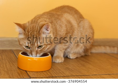 Ginger cat eating dry food from orange bowl
