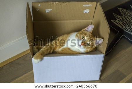 Ginger cat in a carton box - stock photo