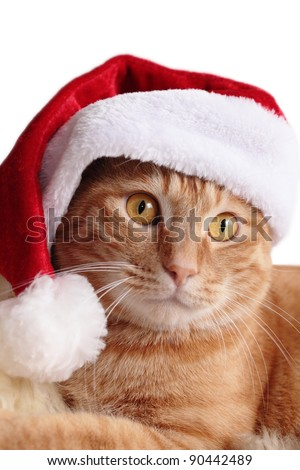 Ginger cat in christmas cap - stock photo