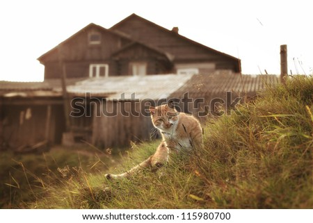 ginger cat in the rural landscape - stock photo