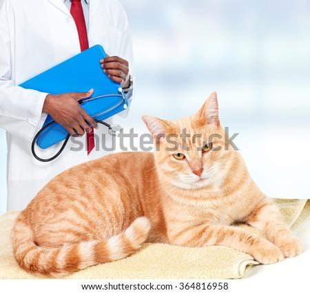 Ginger cat in veterinary clinic. - stock photo