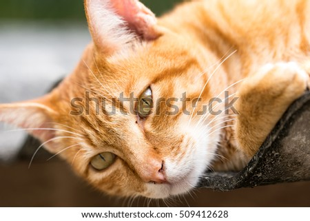 Ginger Cat isolated over green background. Animal portrait.