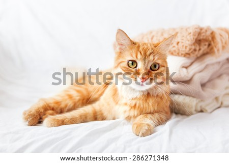 Ginger cat  lies near a pile of beige woolen clothes on a white background. Warm knitted sweaters and scarfs are folded in one heap. Soft focus.