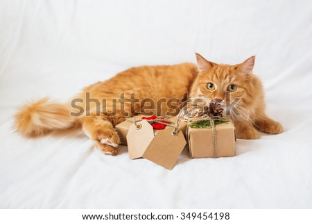 Ginger cat lies on bed and sniffing stack of christmas presents. Gifts are wrapped in craft paper and have empty tags for your text.