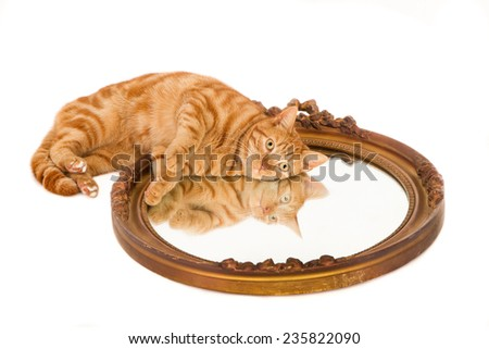 Ginger cat lying on an old mirror, white background - stock photo