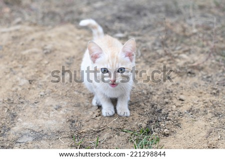 Ginger cat meowing outdoor and looking straight - stock photo