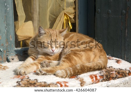 Ginger Cat on Window Sill