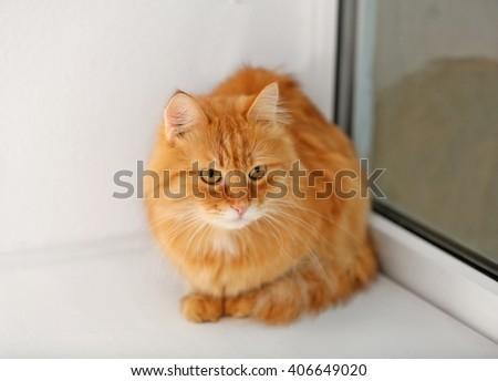 Ginger cat on windowsill background - stock photo
