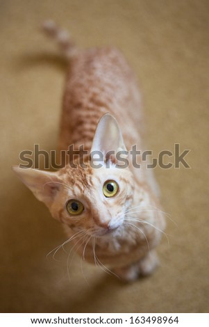 Ginger cat selected focus