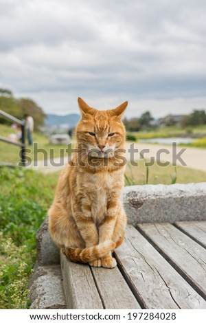 Ginger cat sit on the bench in Kyoto, Japan. - stock photo