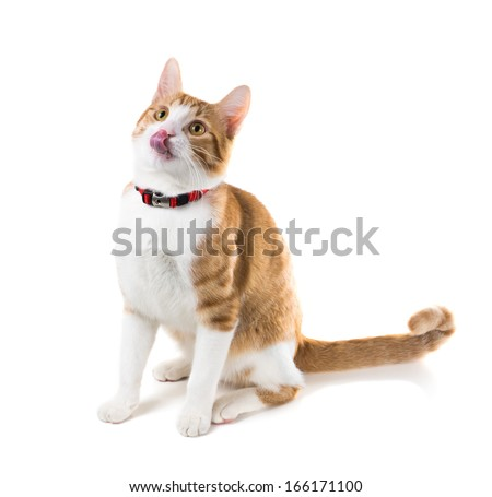 Ginger cat sitting in a red collar and licked - stock photo
