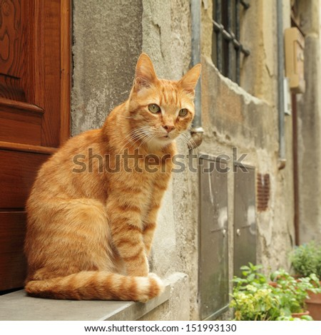 ginger cat sitting in front of tuscan house, Italy - stock photo