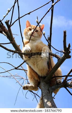 Ginger cat sitting on a willow.  - stock photo