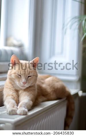 Ginger cat sleeping - stock photo