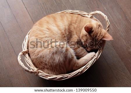Ginger cat sleeping in basket - stock photo