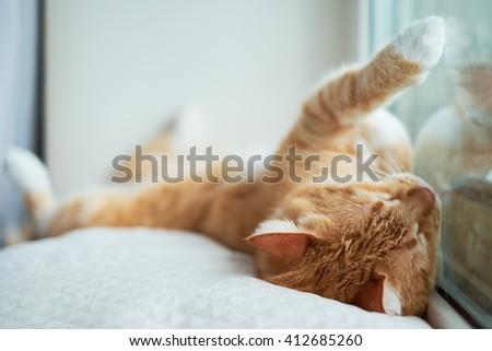 Ginger cat sleeping near a window - stock photo