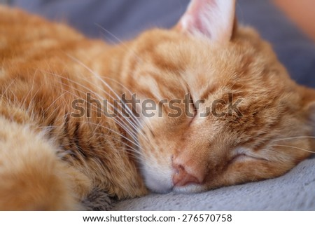 Ginger cat sleeping on a blanket - stock photo